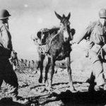 World War II – Merrill's Marauders